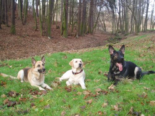 298658dc3d2 Poslušnost tří psů jednoho pána